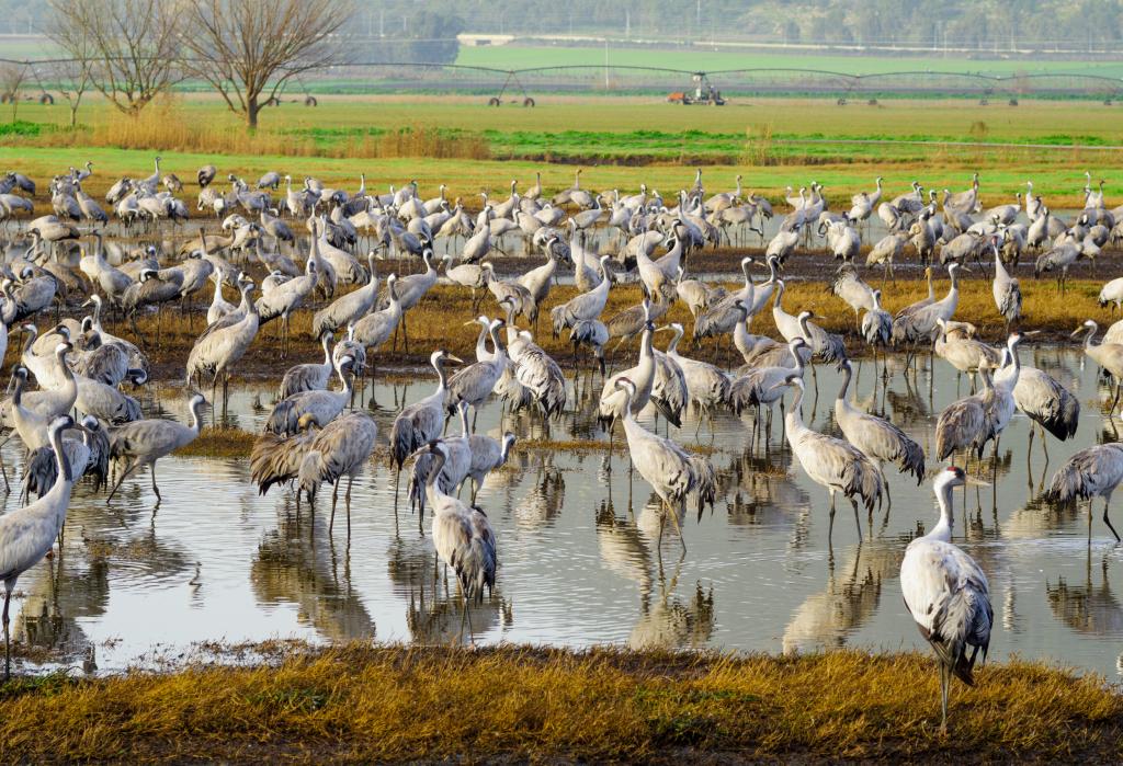 A wildlife refuge