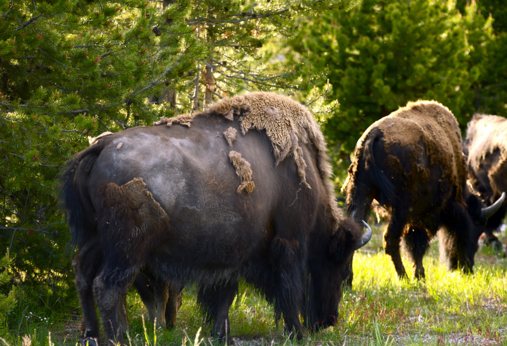 Caring for Native Wildlife as a Rehabilitation