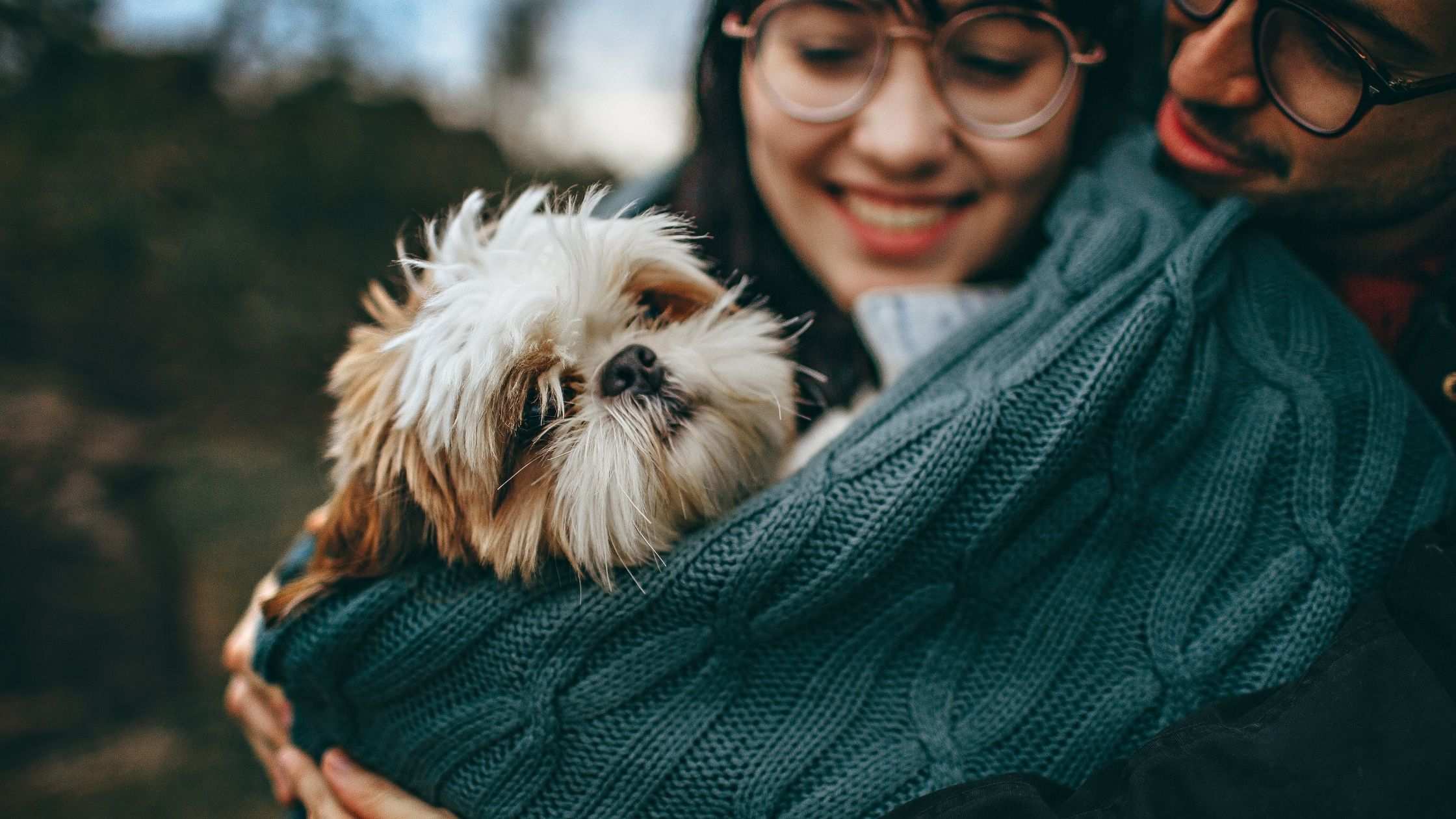 Dog Ear infection Prevention