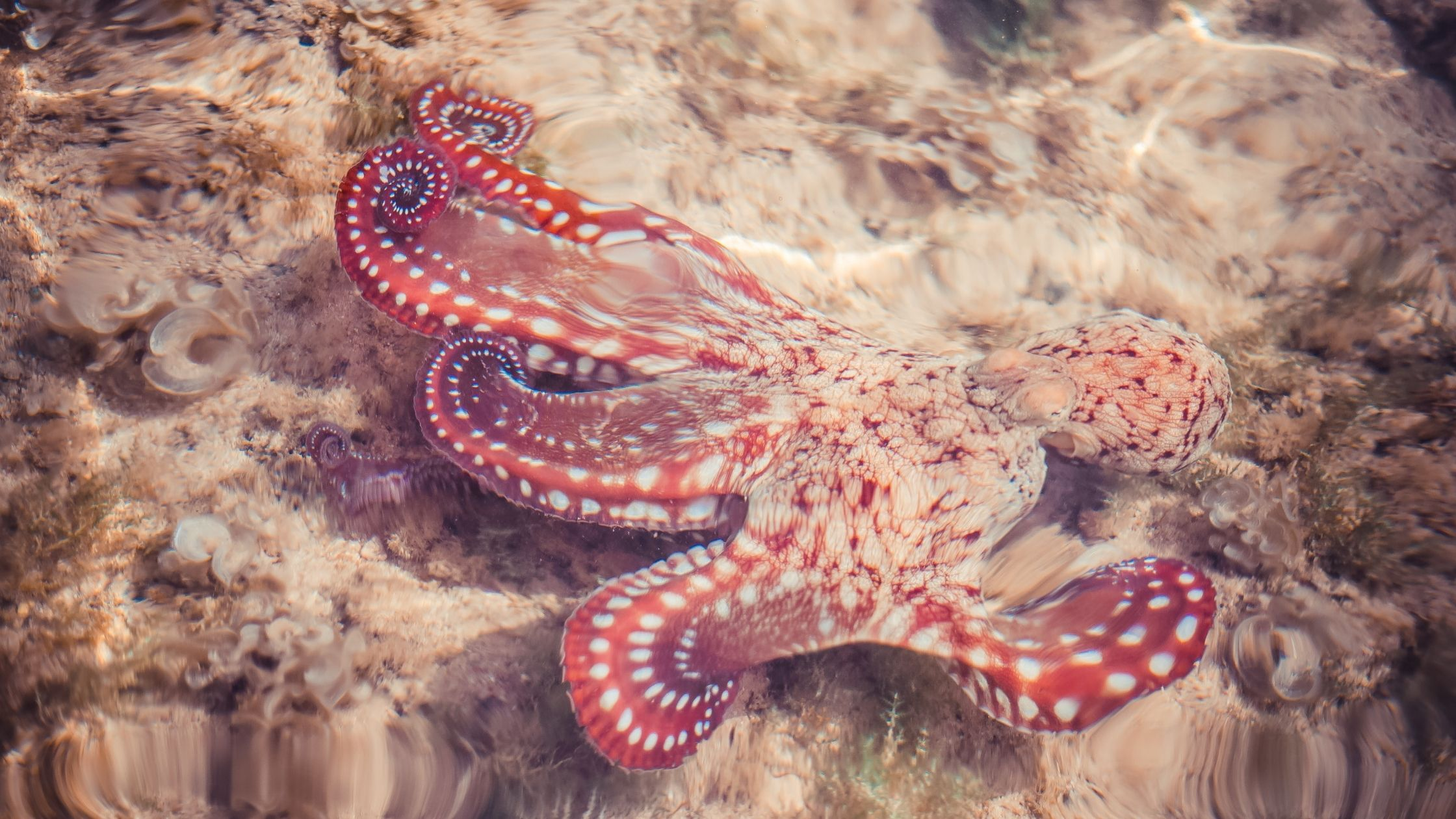The Octopus, is always a symbol of sacrifice